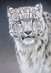 Snow Leopard (Pastel) by Darryn Eggleton -  sized 20x28 inches. Available from Whitewall Galleries